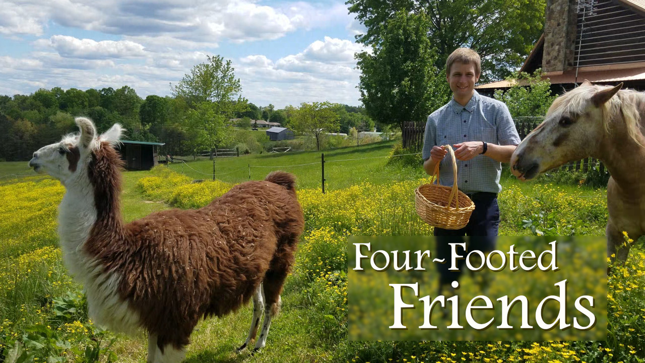 Four-footed Friends